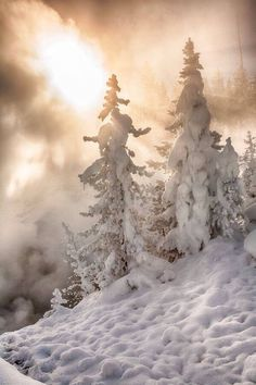 """Winter """"Yellowstone Sun"""" by Dave Gaylord on - Early morning in Yellowstone National Park Winter Szenen, I Love Winter, Winter Magic, Winter Christmas, Winter Light, Snow Light, Winter White, Foto Picture, I Love Snow"""