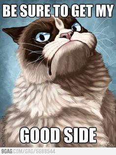 The Instant Cat Meme: Grumpy Cat - Mental Floss Grumpy Cat Quotes, Grumpy Cat Cartoon, Grumpy Cat Images, Funny Grumpy Cat Memes, Funny Cats, Grumpy Kitty, Hilarious Jokes, Funny Animal, Crazy Cats