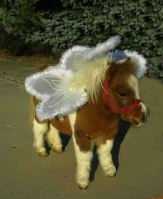 Miniature Horse w/angel wings. Oh my gosh! So cute, I might have to tell my mom to dress her mini up for Halloween!
