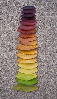 nature rainbow - Andy Goldsworthy~~ we can all do this. next Fall go outside and look for colorful leaves. have fun! That is ART. Land Art, Art Et Nature, Nature Study, Things Organized Neatly, Environmental Art, Natural Forms, Natural Form Artists, Color Inspiration, Color Schemes