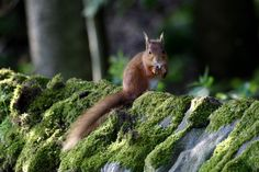 Come and see red squirrels at the Northumberland National Park.