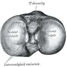 Condyles - right tibia