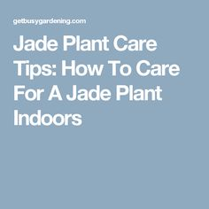 Jade Plant Care Tips: How To Care For A Jade Plant Indoors