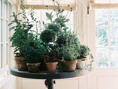 Garden Table for Indoor Winter Plants Indoor winter plants- so pretty!Indoor winter plants- so pretty!