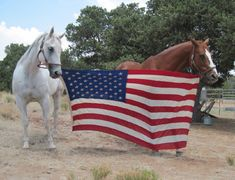 Horses with American Flag - photo credit: Bill Manns American Spirit, American Pride, American Flag, American Independence, American Symbols, Happy Independence, American Country, American Idol, I Love America