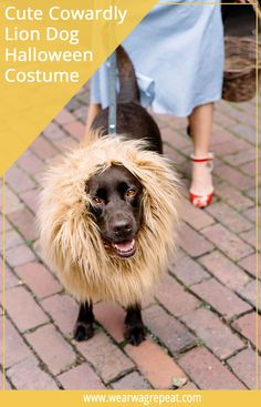 Easy Halloween Couples Costume With your Dog: Dorothy and The Lion! This is perfect for dogs and their owners to trick or treat! Hallowen Costume, Halloween Couples, Dog Costumes, Couple Halloween Costumes, Easy Halloween, Halloween Party, Funny Couple Costumes, Durable Dog Toys, Dog Cleaning
