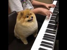 Cute pet dog with amazing talent