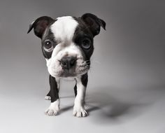 I WANT him!!!!!