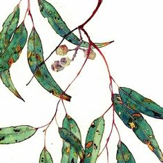 Gum leaves: Gabby Malpas watercolour greeting card and envelope by Mango Frooty Illustration Botanique, Art Et Illustration, Leaf Drawing, Painting & Drawing, Botanical Drawings, Botanical Prints, Art Floral, Watercolor Flowers, Watercolor Paintings