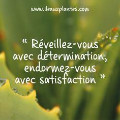 Citation du jour #citation #pensée #citationdujour #citationpositive