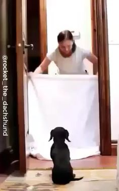 If you are a dachshund owner, you must be familiar with funny moments or lovely activities your sausage dogs do. Your four-legged friends can be… Dachshund Breed, Dapple Dachshund, Funny Dachshund, Funny Dogs, Funniest Animal Videos, Funny Animal Videos, Funny Animals, Daushund Puppies, Cute Dogs And Puppies