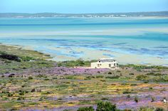 Spring in Langebaan. West Coast. South Africa.  #langebaan #spring #flowers