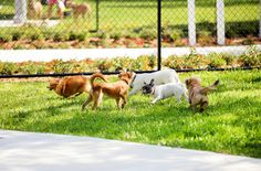 Mrs. Post may not have had the convenience of dog parks in her time, but if she did, we bet that she would have written a book of etiquette on the subject. But since she didn't, we're going to share our guide to proper Dog Park Etiquette, inspired by the First Lady of Manners.
