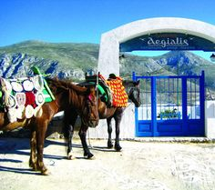 The Aegialis mules await tourists.