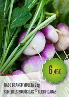 Nabo Branco Violeta Biológico - Variedade precoce, que permite uma colheita faseada. Nabos redondos, muito achatados, de cor branca e violeta claro.