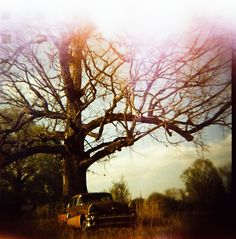 HOLGA Photography Rusty Car / Burned Tree by SRandolphLomography
