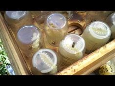 Bees Working and filling Glass Jars for Completely Organic® Glass Jars, Mason Jars, My Honey, How To Make Beer, Wine And Beer, Bee Keeping, Harvest, Organic, Mugs