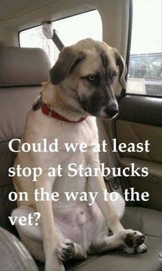 images of funny dogs - Google Search