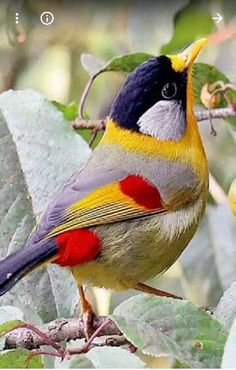 I wonna see these beautiful birds
