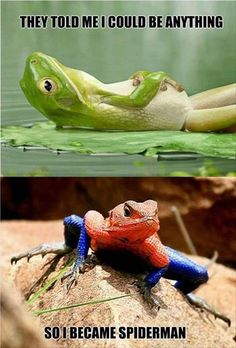 Tiny Hat Scarves Frogs And Animal - Frog wearing two snails as hat becomes star of hilarious photoshop battle