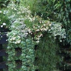15++ Fleurs en jardiniere plein soleil inspirations