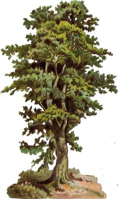 Oblaten Glanzbild scrap die cut  chromo  Baum tree  17cm    Eiche oak