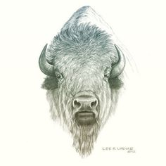 Bull Tattoos, Head Tattoos, Body Art Tattoos, Buffalo S, Buffalo Animal, Oklahoma Tattoo, Buffalo Pictures, Bison Tattoo, Buffalo Tattoo