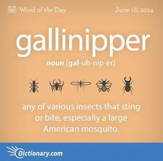 Gallinipper Definition, Any Of Various Insects That Sting Or Bite,  Especially A Large American Mosquito, Psorophora Ciliata.