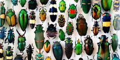 """(*Very Passionate article re:"""" In Defense of Biodiversity: Why Protecting Species from Extinction Matters - Yale Physical Environment, Opinion Piece, Life Form, Nature Study, Science News, Native Plants, Natural World, Color Inspiration, Habitats"""