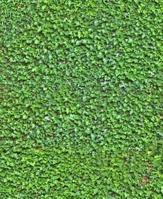 ivy wall seamless texture                                                       … Tiles Texture, 3d Texture, Texture Design, Game Textures, Textures Patterns, Autocad, Wall Climbing Plants, Ivy Wall, Revit