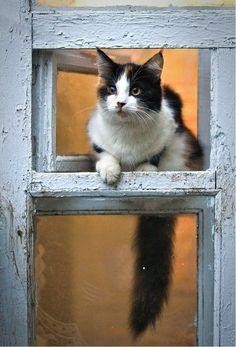 Chat ~ Cat loves windows