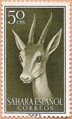 Sáhara Español 1956 - Portal Fuenterrebollo