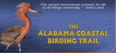 Alabama Gulf Coast Birding and Nature Festival, Alabama Coastal BirdFest Alabama Outdoors, Dauphin Island, Fort Morgan, Land Trust, Beach Activities, Life List, Deep Sea Fishing, Orange Beach, Gulf Of Mexico