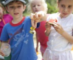 Ui, was ist das für ein Käfer? Auf Kreta bieten wir uns naturpädagogischen Programm an.