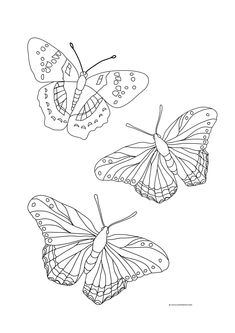 Coloring Page Of A butterfly Coloring Page Of A butterfly. Coloring Page Of A butterfly. butterflies Free to Color for Kids butterflies Kids in butterfly coloring page Butterfly Coloring Pages Shape Coloring Pages, Horse Coloring Pages, Easy Coloring Pages, Flower Coloring Pages, Free Printable Coloring Pages, Coloring Pages For Kids, Kids Coloring, Free Coloring, Colouring