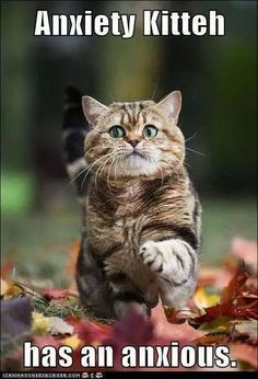 20 Cute and Funny Animal Fall Pictures You'll Love More than PSL #fallmemes #cutememe #cuteanimals #funnyanimals #animalmemes Yoda Funny, Funny Cat Memes, Funny Cartoons, Funny Dogs, Memes Humor, Funny Quotes, Funny Animal Pictures, Funny Animals, Cute Animals