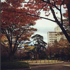 Higashi Ojima neighborhood Tokyo 9-Nov Www.Couchflyer.com #gf_Japan #japan_daytime_view #nature_archive #phos_japan #ig_japan #bestjapanpics #icu_japan #bestjapanpics #gf_nature #wp_japan @icu_japan @japan_daytime_view @_photo_japan_  @art_of_japan @instagramjapan @wp_japan @japan_of_insta @lovers_nippon #nature_brilliance #ig_myshot #tv_nature #ig_color #rsa_nature #outdoors #bestnatureshots @team_jp @leaveonlyleaves @igersjp