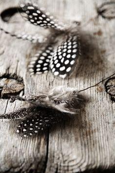 shells http://www.pinterest.com/pin/472948398340468680/