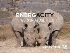 Through these hard times, �stick together!  C21 SA is proud and honoured to be supporting global rhino conservation. A Worldwide Leader In Real Estate in partnership with Save the Rhino International.  Buy | Sell | Rent www.century21.co.za www.savetherhino.org/ #C21 #Leaders #buy #sell #rent #ENERGACITY #support #worldwideleader #givingback #SAVETHERHINO Save the Rhino International Save The Rhino, Working Together, Hard Times, Conservation, Property For Sale, South Africa, Elephant, Buy And Sell, Real Estate