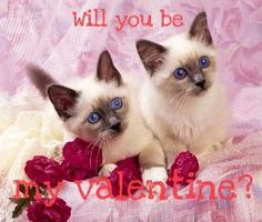 585 Best Valentine Cats Images Pretty Cats Crazy Cats I Love Cats