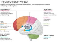 New Finding: Different Types of Exercise Affect Different Parts of Your Brain : Conscious Life News