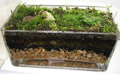 Indoor moss garden...*i like how you can see all the different layers through the glass!***