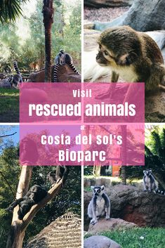 Animal conservation done right at the Bioparc in Fuengirola, Costa del Sol in Spain. Meet rescued animals and learn about responsible animal tourism.