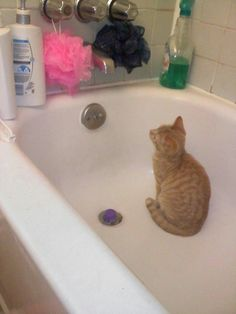 10+ Cats Who Absolutely Love Being In Water | | PurrWorld