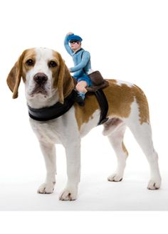 Dog Halloween costume - mailman rider  sc 1 st  Pinterest & 23 best The Beagle Pack: Cute gifts and unique finds for this ...