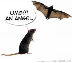 funny rat pictures - Google Search