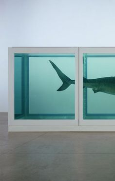 """Damien Hirst, 22 ton piece titled """"the physical impossibility of death in the mind of someone living"""""""