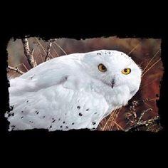 Amber Gaze Snow Owl 3D HEAT PRESS TRANSFER T Shirt Sweatshirt Tote Fabric #218 #AB