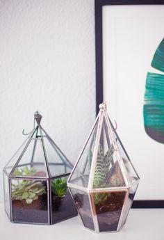 Indoor garden. Terrarium