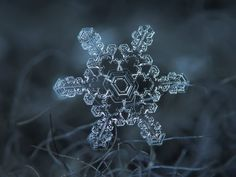 ghost in the machine - Extreme Close-up Photography of Snow Flakes. Close Up Photography, Amazing Photography, Nature Photography, Micro Photography, Photography Ideas, Winter Photography, Snowflake Photography, Snowflake Images, Snowflake Snowflake